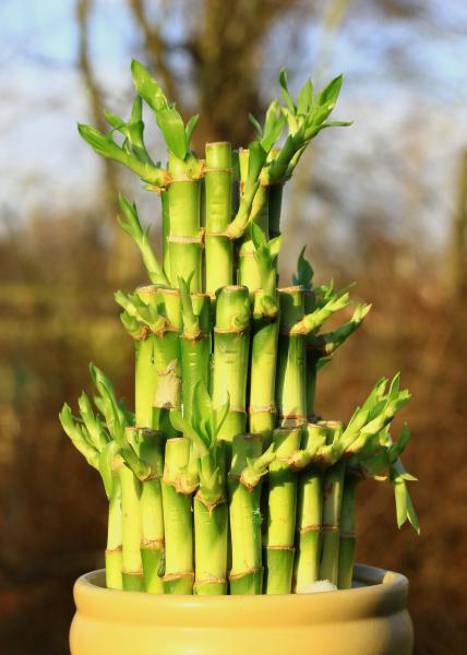 bamboo-588339_1920.jpg