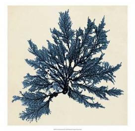 coastal-seaweed-ix-150-x-150-in