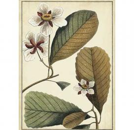 ivory-botanical-study-iii-580-x-810-in