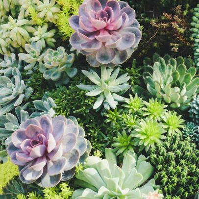 Three Expert Tips to Grow Your Own Herb Garden