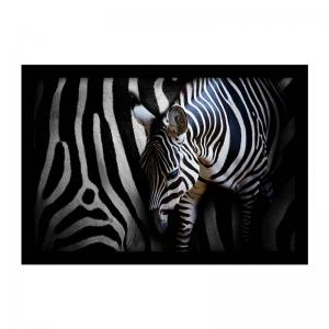 zebra-art-print-s - art-prints